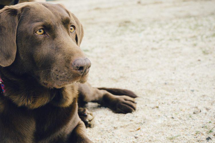 Pet Trusts Austin Estate Planning Lawyer